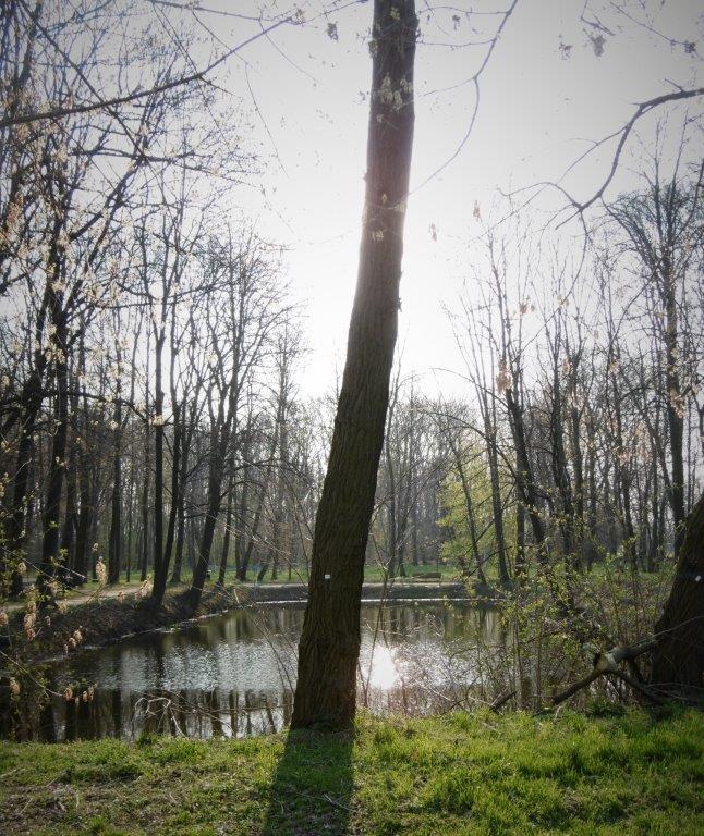 Mały staw wParku Ołtarzewskim wlinii Kanału Ożarowskiego foto: Piotr Michalczyk
