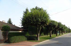 Ulica Janusza Kusocińskiego