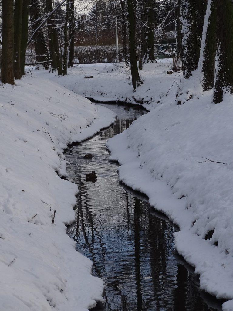 Kanał Ożarowski wParku Ołtarzewskim zimą 2016 roku, zb. G L-Z