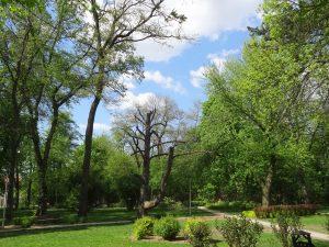 Ogródek Jordanowski i TPD